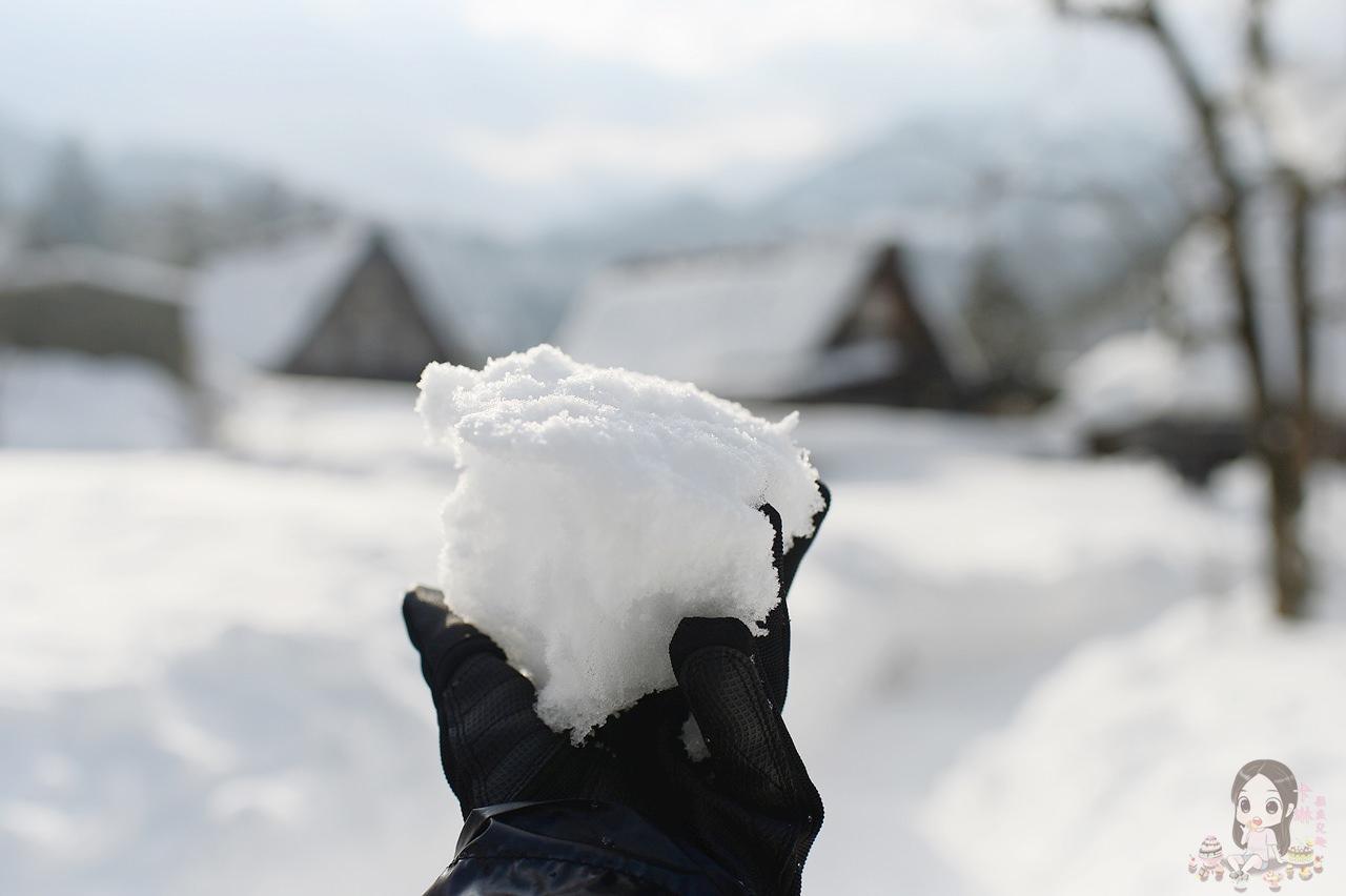 【開箱】攝影手套《PHOTO HOUSE 戶外防寒手套》防水止滑 小企鵝機能手套