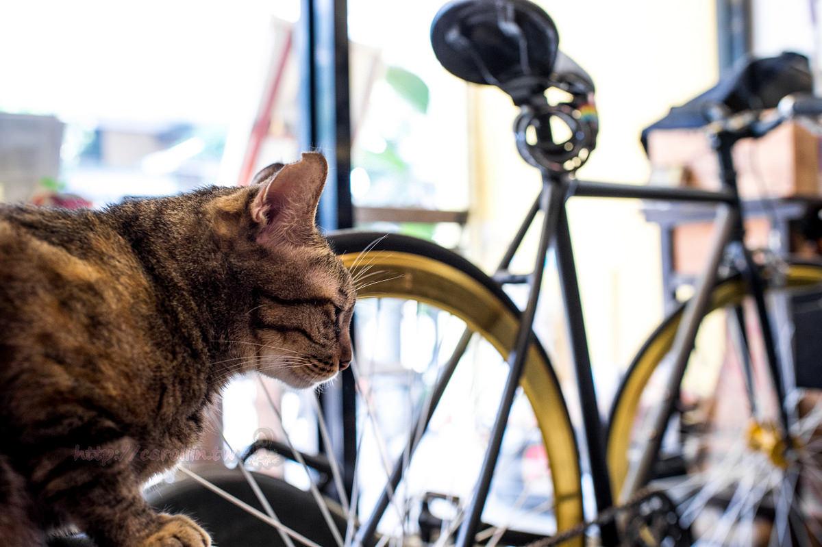 台北美食 | 中正區 UNI CAFE 自家烘焙咖啡店 – 有貓貓相伴的愜意下午茶