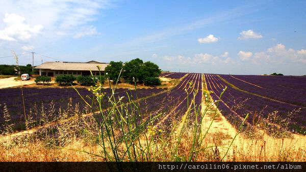 【旅遊】法國自由行。南法《普羅旺斯花海》村野風情花田絕美風景