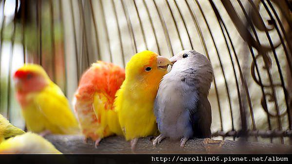 【隨興亂拍】台中。綠園道核果 籠中鳥