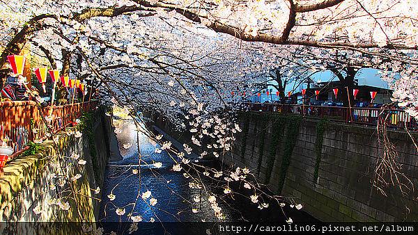 【遊記】2012日本東京。目黑川賞櫻