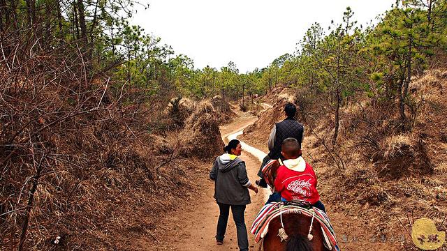 【旅遊】雲南自由行。麗江《茶馬古道》騎滇馬賞沉寂深山的南方絲路美景