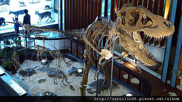 【觀展】人文與自然的推演《國立台灣博物館:土銀展示館》