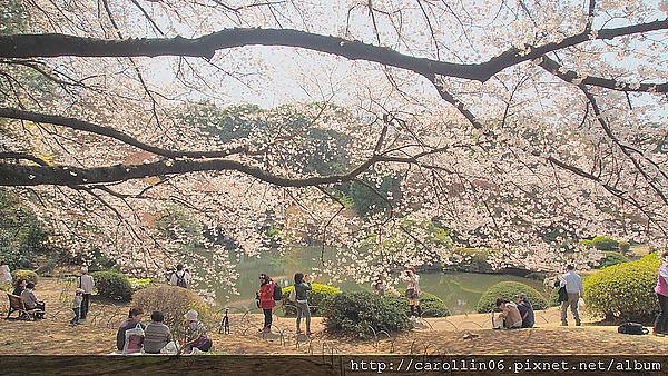 【遊記】2012東京。新宿御苑 與櫻共午
